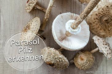 Parasol-Pilz erkennen